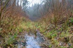 Wasserlauf im Holz im Herbst Lizenzfreie Stockbilder