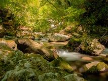 Wasserlauf versteckt und vor wilder Vegetation geschützt Stockfotografie