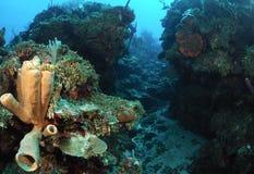 Wasserlebensdauer auf Korallenriff Lizenzfreie Stockfotografie