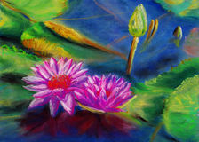 Wasserlilie Stockbilder