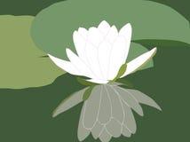 Wasserlilie stock abbildung
