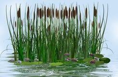 Wasserlilie und -ansturm in einem Wassersee Stockbild