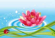 Wasserlilie und -marienkäfer stock abbildung