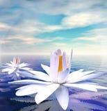 Wasserlilien Stockfotografie