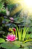 Wasserlilienhintergrund Lizenzfreie Stockfotos