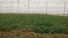 Wassermelone in Marrakesch Lizenzfreies Stockfoto