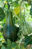 Wassermelone und Kürbis Stockfotografie