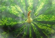 Wassermelonebeschaffenheit Lizenzfreies Stockfoto