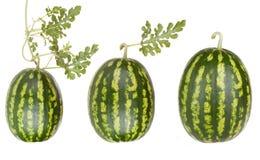 Wassermelonefrüchte mit Blättern Stockfotografie