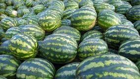 Wassermelonen Stockfotografie