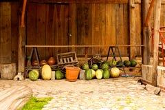 Wassermelonen gesetzt auf den Boden Stockfotografie