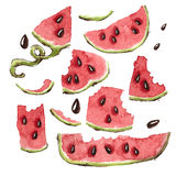 Wassermelonen-Scheiben eingestellt Stockbild