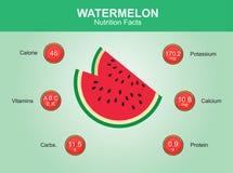 Wassermelonennahrungstatsachen, Wassermelonenfrucht mit Informationen, Wassermelonenvektor Lizenzfreies Stockfoto