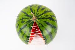 Wassermelonenstück gepflanzt von einer anderen Perspektive lizenzfreie stockfotos
