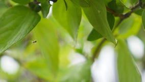 Wassernasen auf Blättern schließen oben stock footage