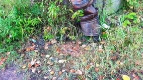 Wassernasen in eine Pfütze nahe einem rostigen Abflussrohr stock video footage