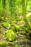 Wassernebenfluß in einem Wald Stockbild