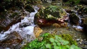 Wassernebenflussflüsse stock footage