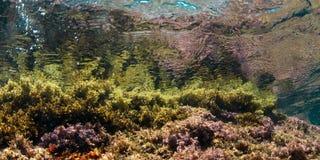 Wasseroberfläche gesehen von der felsigen Unterseite der Meerespflanze Weiche blaue Farben Costa Brava katalonien lizenzfreie stockfotos
