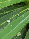 Wasserperlen Lizenzfreies Stockbild