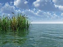 Wasserpflanzen Lizenzfreies Stockbild