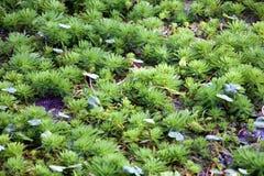 Wasserpflanzen auf dem See Stockfotos