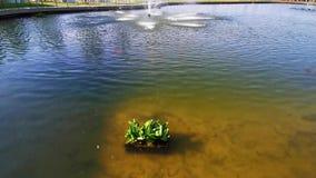 Wasserpflanzen auf thermischem See stock video