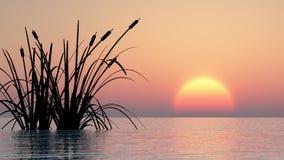 Wasserpflanzen am Sonnenuntergang