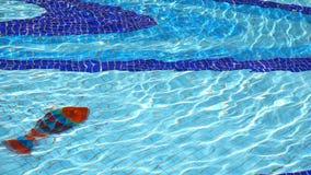 Wasserpool und -feiertag stock video