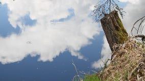 Wasserreflexion von Wolken und Himmel und Baumstamm stock footage