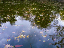 Wasserreflexionshintergrund Stockbilder