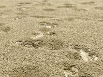 Wasserregentropfen auf der Sandnahaufnahme Stockbild