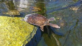 Wasserschildkröte Stockbild