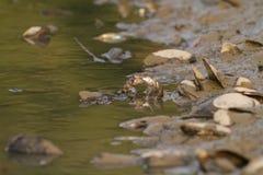 Wasserschlange auf dem Fluss Stockfoto
