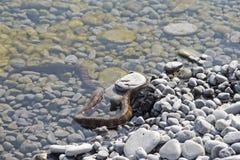 Wasserschlange mit Opfer Stockfotos