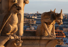 Wasserspeier von Notre Dame Stockbild
