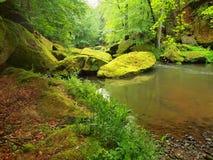 Wasserspiegel unter frischen grünen Bäumen in Gebirgsfluss Frische Frühlingsluft am Abend Lizenzfreie Stockbilder