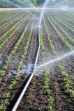 Wasserspray Lizenzfreie Stockfotos
