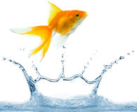 Wasserspritzen lizenzfreies stockbild