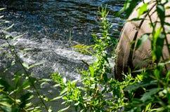 Wasserströme vom Rohr in den Fluss Lizenzfreie Stockfotos