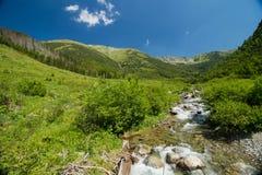 Wasserstrom in den Bergen Stockfotos