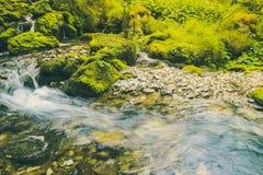 Wasserstrom im Dschungel Stockfotos