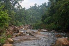Wasserstrom im Wald Stockbilder
