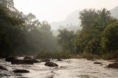 Wasserstrom im Wald Stockfotos