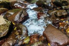 Wasserstrom mit Stein Stockfotografie