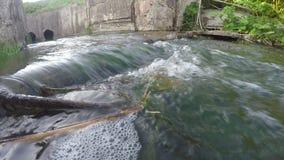Wasserstrom, wenig Fluss oder Fluss am sonnigen Tag stock footage