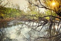 Wassersumpf im frühen Frühling Lizenzfreies Stockfoto