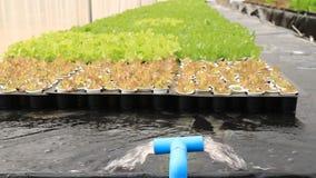 Wassersystem im Wasserkulturbauernhof stock footage