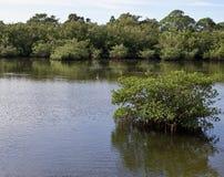 Wasserszene mit dem Fischherausspringen des Wassers stockfotos
