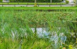 Wasserteich im Park mit Rosa lilly ` s Lizenzfreie Stockfotografie